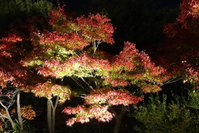京都のライトアップ2018 梅小路公園 紅葉まつり No7