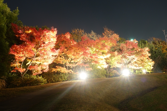 京都のライトアップ2018 梅小路公園 紅葉まつり No17