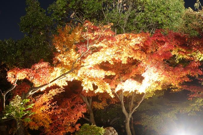 京都のライトアップ2018 梅小路公園 紅葉まつり No18