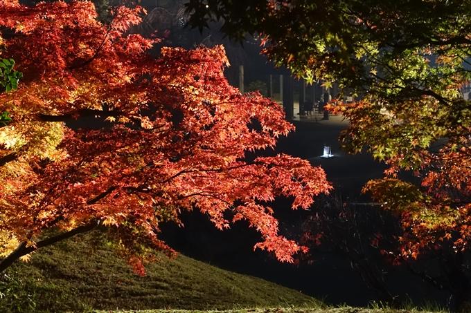 京都のライトアップ2018 梅小路公園 紅葉まつり No19
