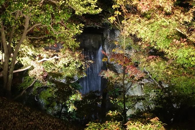 京都のライトアップ2018 梅小路公園 紅葉まつり No27