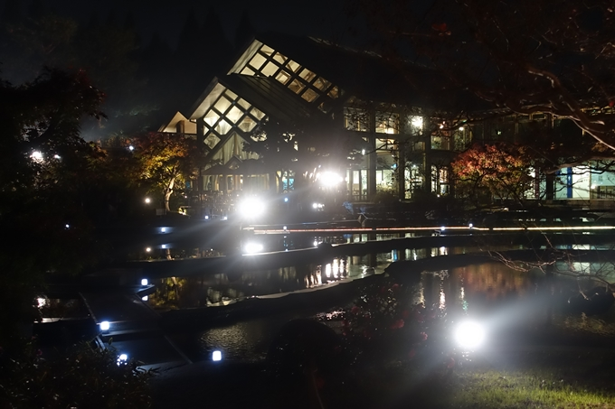 京都のライトアップ2018 梅小路公園 紅葉まつり No29