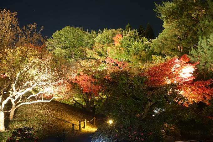 京都のライトアップ2018 梅小路公園 紅葉まつり No31