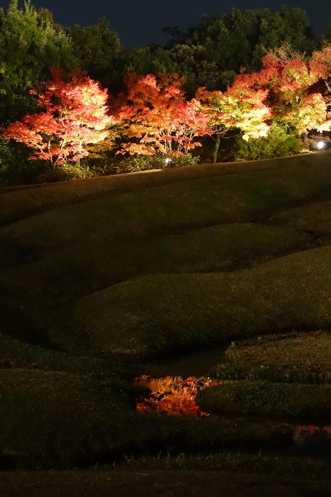 京都のライトアップ2018 梅小路公園 紅葉まつり No34