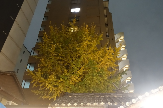 京都紅葉速報2018 その23 御金神社 No13