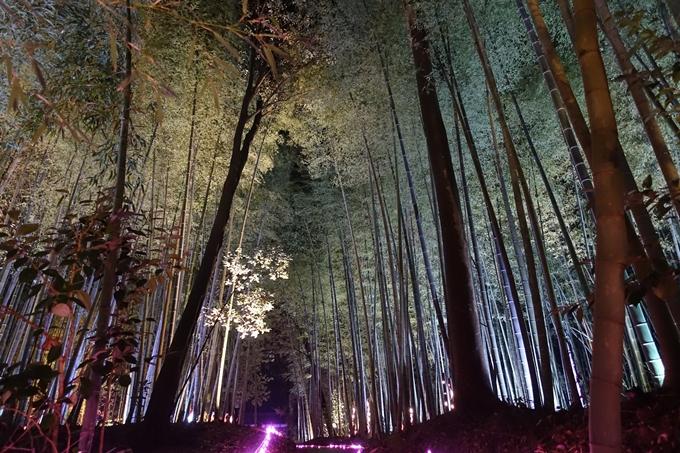 京都のライトアップ2018 丹波夢ナリエ No20
