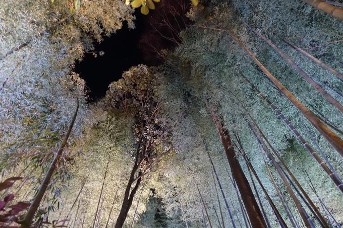 京都のライトアップ2018 丹波夢ナリエ No21