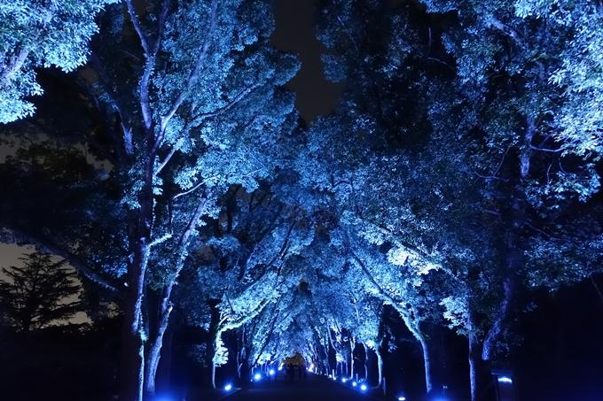 京都府立植物園イルミネーション2018 No15