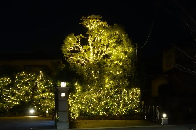 北山ウェディングストリート クリスマスイルミネーション No22