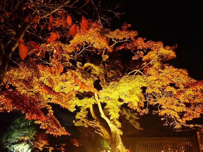 京都のライトアップ2018 大覚寺 No31