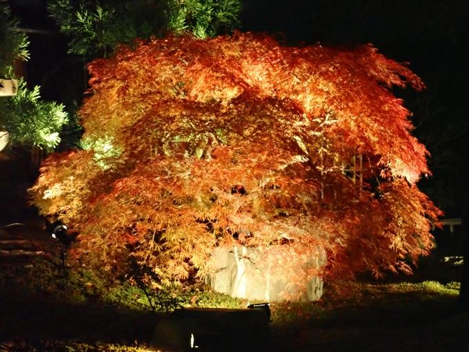 京都のライトアップ2018 大覚寺 No32