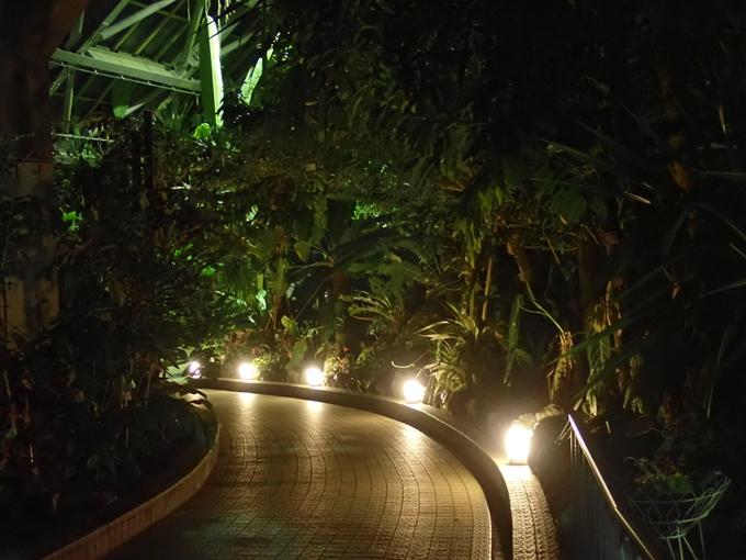 京都府立植物園イルミネーション2018 No38