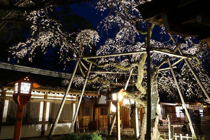 京都桜速報2019_04 No20