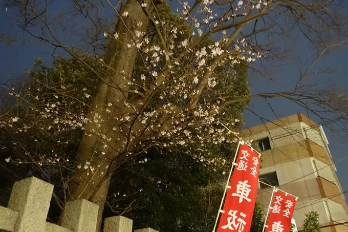 京都桜速報2019_04 No22