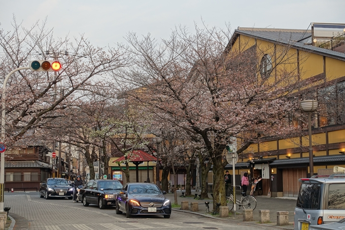 京都桜速報2019_06 No6