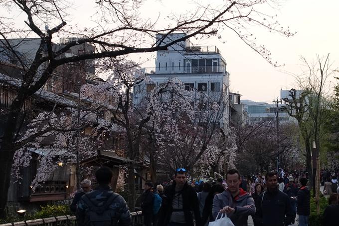 京都桜速報2019_06 No23