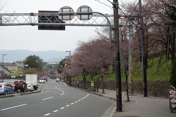 京都桜速報2019_07 No2