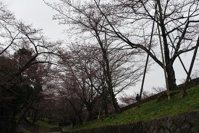 京都桜速報2019_07 No4