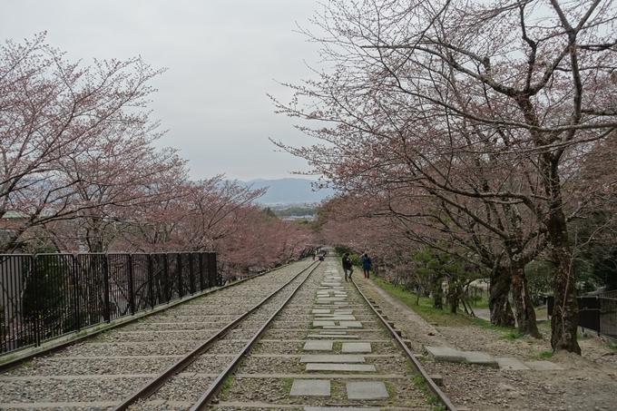 京都桜速報2019_07 No5