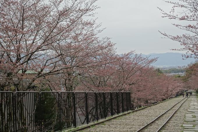 京都桜速報2019_07 No6