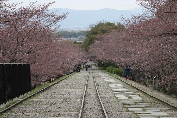 京都桜速報2019_07 No8