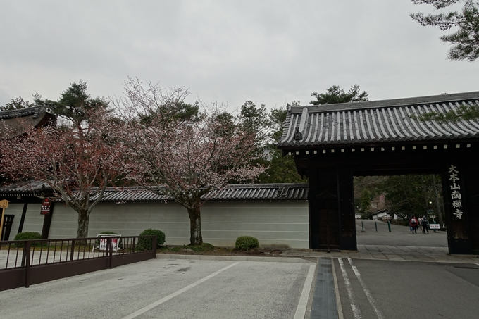 京都桜速報2019_08 No3