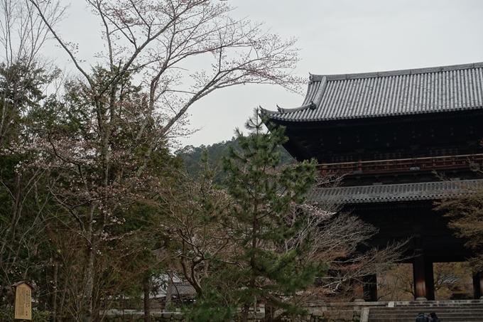 京都桜速報2019_08 No4