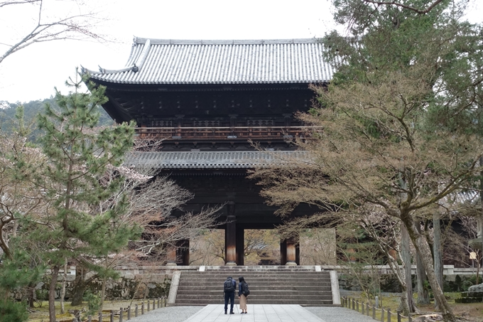 京都桜速報2019_08 No5