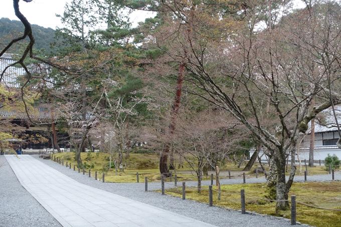 京都桜速報2019_08 No6