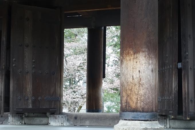 京都桜速報2019_08 No7