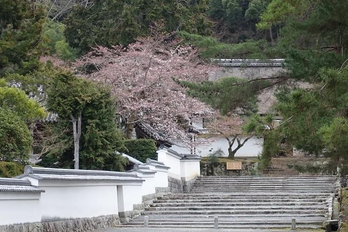 京都桜速報2019_08 No10