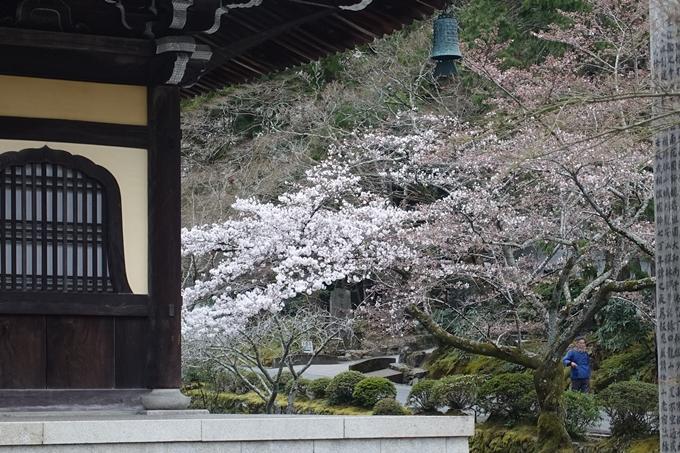 京都桜速報2019_08 No11