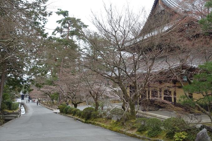 京都桜速報2019_08 No14