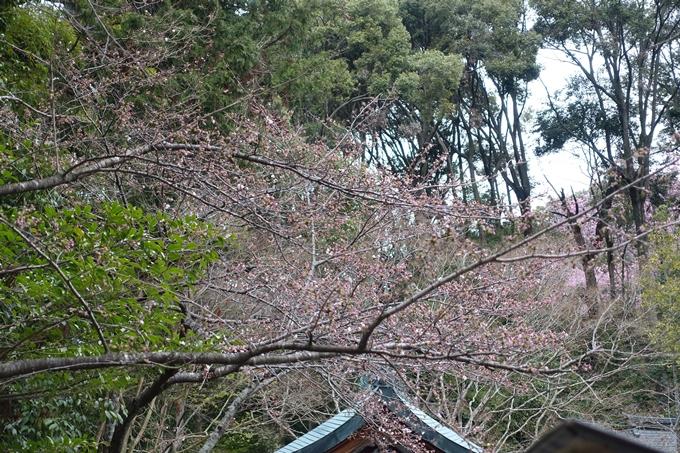 京都桜速報2019_11 No4