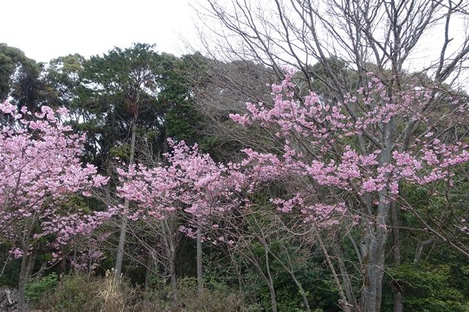 京都桜速報2019_11 No9