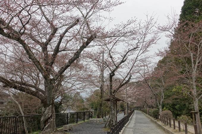 京都桜速報2019_09 No3