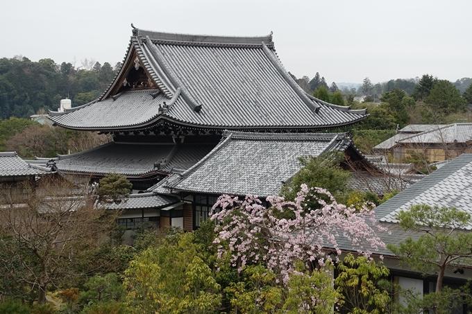 京都桜速報2019_09 No4