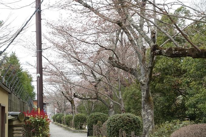 京都桜速報2019_09 No5