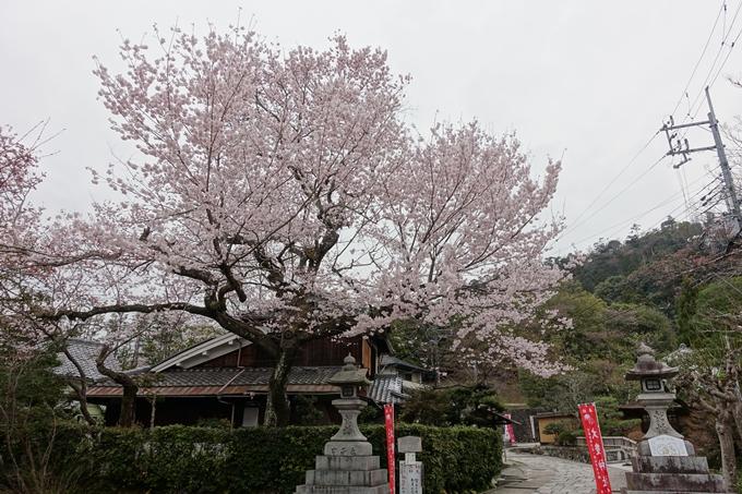 京都桜速報2019_10 No2