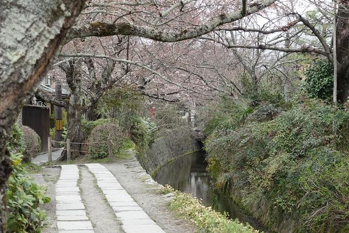 京都桜速報2019_09 No10