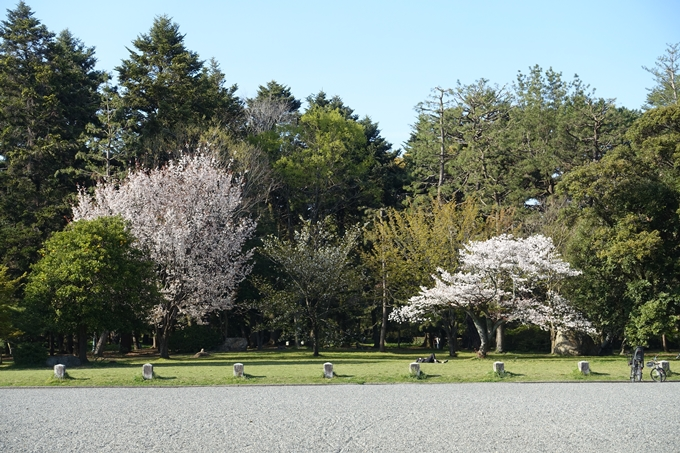 京都桜速報2019_38 No4