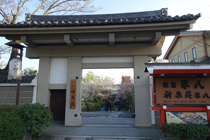 京都桜速報2019_39 No2