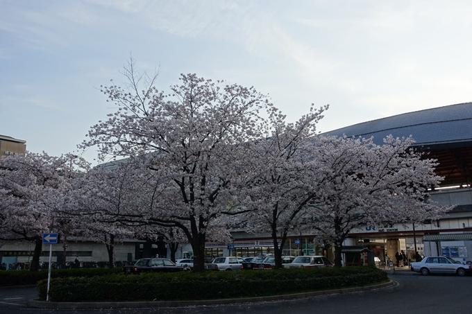 京都桜速報2019_40 No3