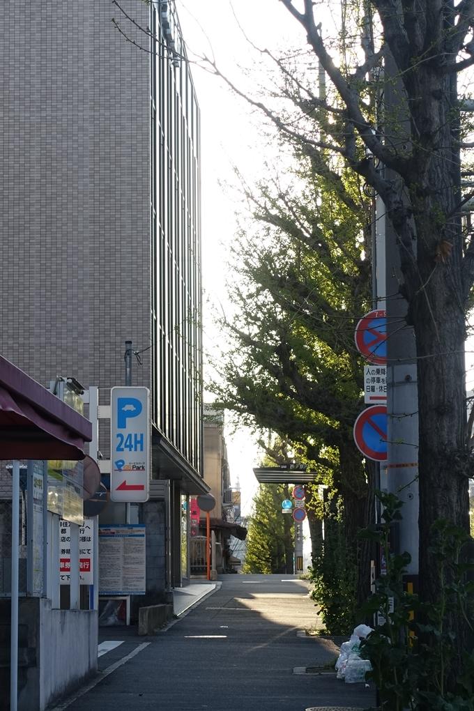 京都_街路樹_イチョウ No6