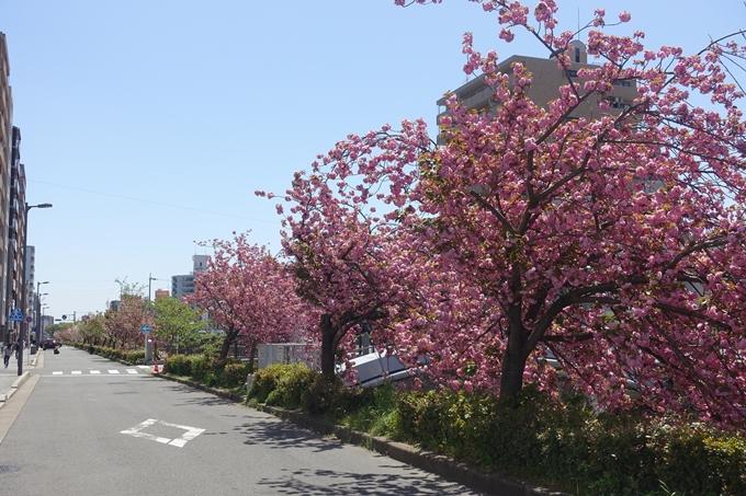 京都桜速報2019_45 No8