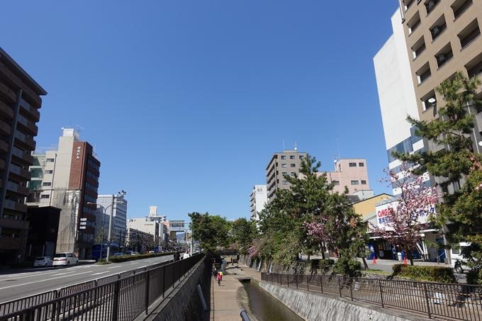 京都桜速報2019_45 No31