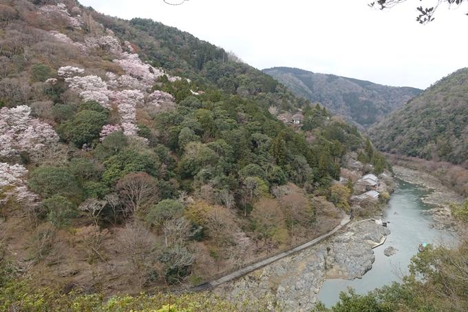 京都桜速報2019_12 No11