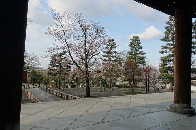 京都桜速報2019_13 No12