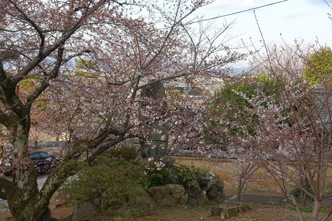 京都桜速報2019_13 No14