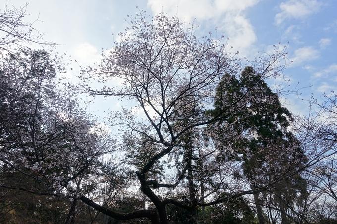 京都桜速報2019_14 No8